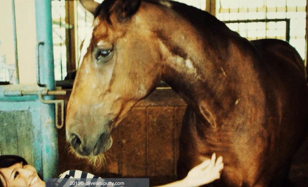 horses LOVE me!