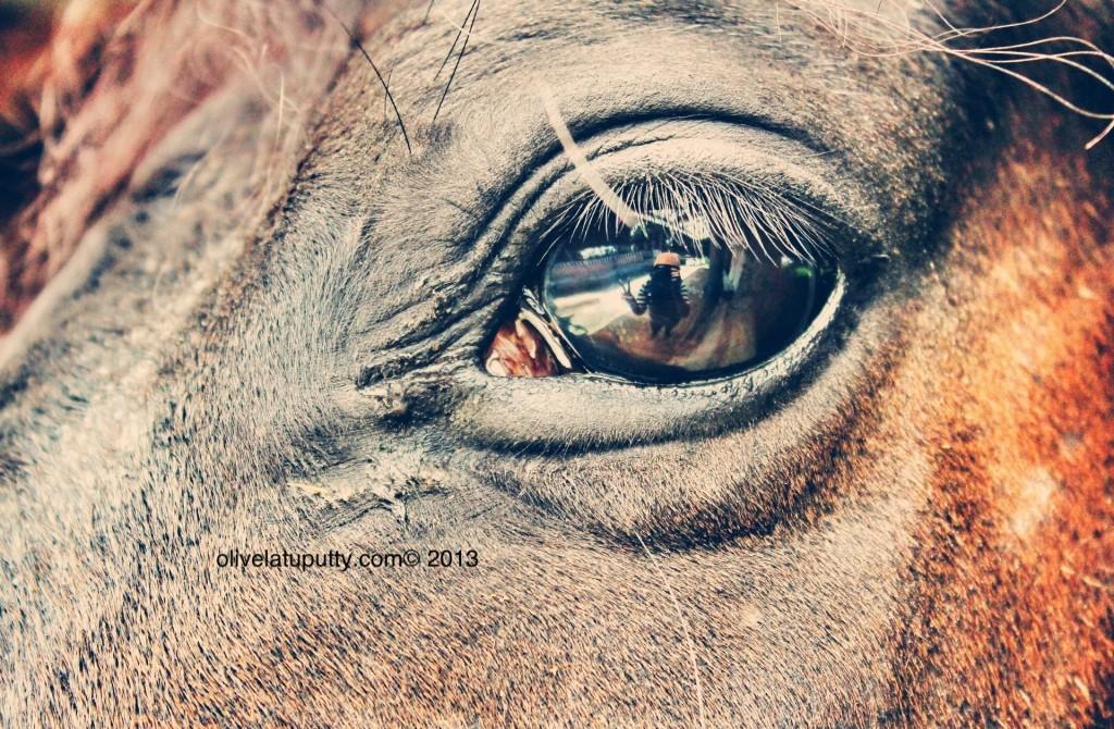 Equestrian berkuda di jakarta