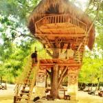 Tree House in Bali. I like!