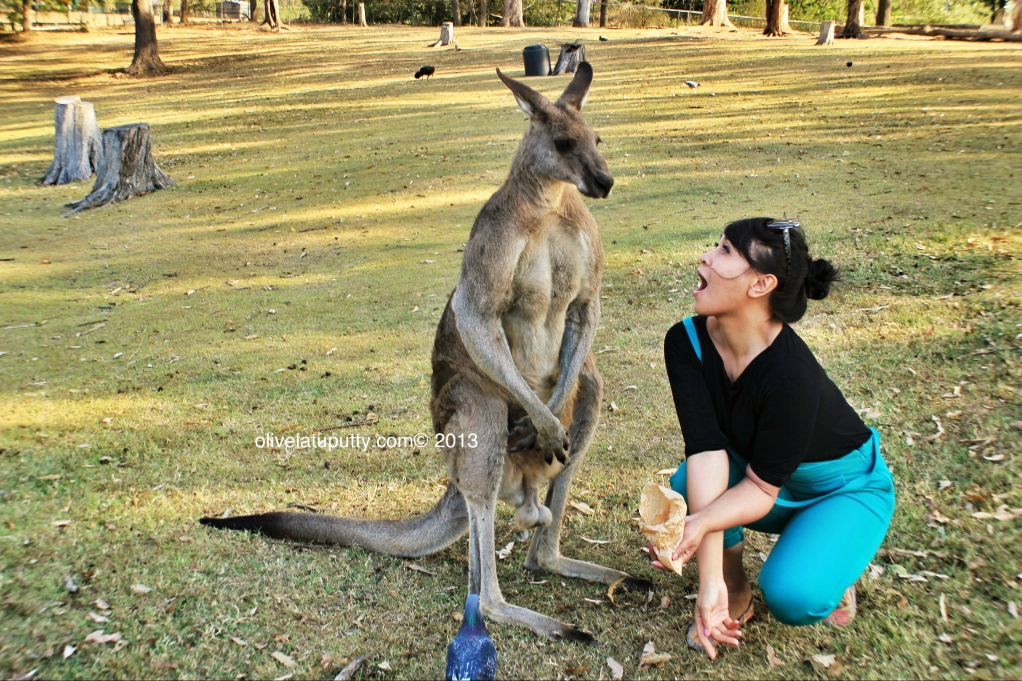 an analysis of the kangaroo environmental adaptation in australia The national climate resilience and adaptation strategy sets out how australia is managing climate risks for the benefit of the community, economy and environment.