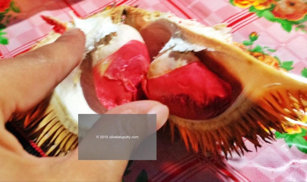 berburu durian merah