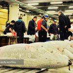 Nonton Lelang Tuna di Tokyo – the experience